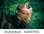 beautiful lions in savannah | Shutterstock . vector #426007501