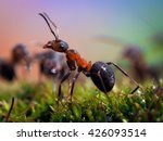 Portrait Of An Ant. Macro. Ant...
