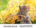 Cute Kitten In The Basket  In...