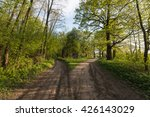 two forest roads with man... | Shutterstock . vector #426143029