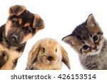 Stock photo puppy and kitten and rabbit 426153514