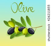 realistic vector olive oil... | Shutterstock .eps vector #426211855