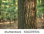 Oak Tree Texture With...
