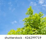 blue sky over trees | Shutterstock . vector #426299719