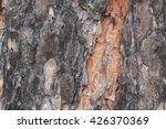 Bark Of Pine Tree. Spring ...