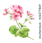 Geranium Flower Watercolor...