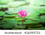 pink water lily on lilypads in... | Shutterstock . vector #426393721