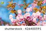 flowering cherry at spring 2 | Shutterstock . vector #426400591