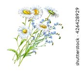 bouquet chamomile and blue... | Shutterstock . vector #426428929