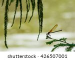 Small photo of American rubyspot resting in tree