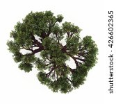 tree in top view isolated white ... | Shutterstock . vector #426602365