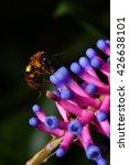 Small photo of Bee and Aechmea gamosepala