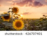 Photo Of A Sunflower On The...