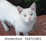 cat with different eyes color... | Shutterstock . vector #426721801