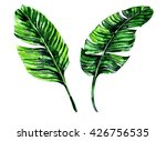watercolor tropical palm leaves ... | Shutterstock . vector #426756535