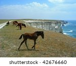 horses on the edge of the... | Shutterstock . vector #42676660