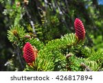 Flowers On A Pine Tree