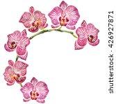 watercolor wreath of beautiful... | Shutterstock . vector #426927871