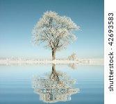 Lone Oak Tree In The Winter...