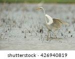 White Heron In Fly  Ardea Alba