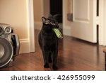 Black Cat Playing Fetch
