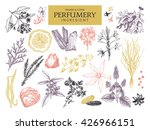 vector collection of hand drawn ... | Shutterstock .eps vector #426966151