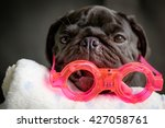 pug dog lying with pink glasses. | Shutterstock . vector #427058761
