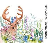 watercolor wild herbs and... | Shutterstock . vector #427090831