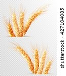 Two Wheat Ears Isolated On A...