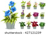 flowers in the clay pot... | Shutterstock .eps vector #427121239