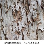 bark of an old tree. texture.... | Shutterstock . vector #427155115