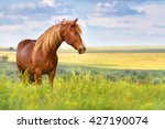 Stock photo red horse with long mane in flower field against sky 427190074