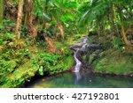 small cascade in el yunque... | Shutterstock . vector #427192801