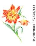 hand drawn watercolor sunny... | Shutterstock . vector #427257655