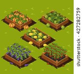 vegetable garden wooden box...   Shutterstock .eps vector #427282759