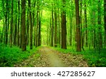 path in green summer forest | Shutterstock . vector #427285627