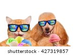 Stock photo cat and dog wearing sunglasses relaxing in the sea background red cat and dog eats ice cream 427319857