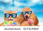 Stock photo cat and dog wearing sunglasses relaxing in the sea background red cat and dog eats ice cream 427319869