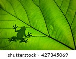 Silhouette Of A Frog Across A...