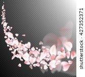 sakura flying petals on dark... | Shutterstock .eps vector #427352371