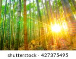 Bamboo Forest With Sunny In...