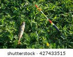 Small photo of entrapment fish