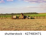 sugar cane plantation   focus...   Shutterstock . vector #427483471