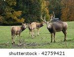 P        Re David's Deer