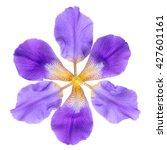 Abstract Fantastic Lilac Iris...