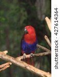 parrot | Shutterstock . vector #427614364