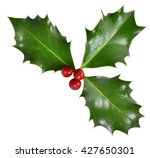 christmas holly. holly ... | Shutterstock . vector #427650301
