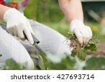 a senior woman   girl   lady... | Shutterstock . vector #427693714