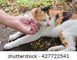 Human Hand Scratching A Thai Cat