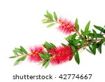 decorative flower with red thin ... | Shutterstock . vector #42774667